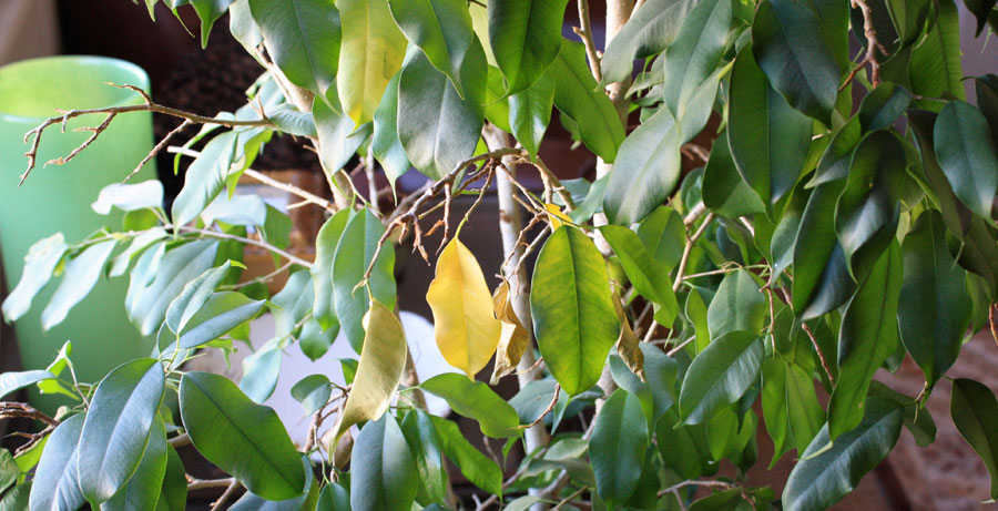 علائم کمبود در گیاهان
